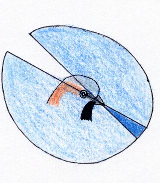 Área de visión (aves diurnas)